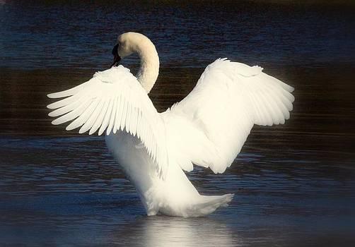 Rosanne Jordan - Angelic Wings