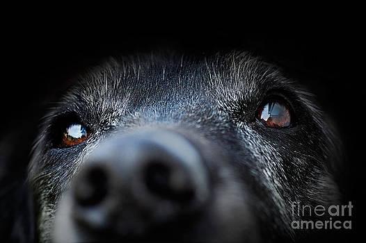 Mythja  Photography - Animal - old dog