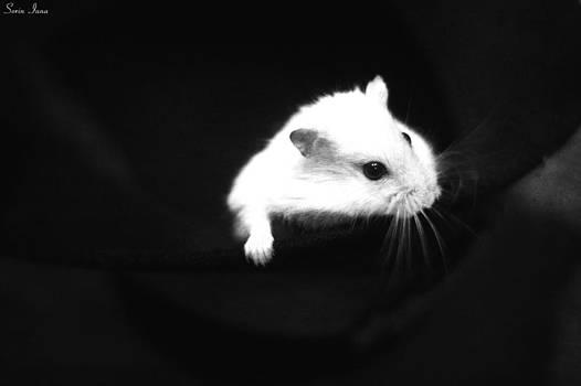 Amazing Hamster by Sorin Iana
