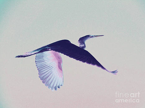 Another kind of Egret by Carol McCutcheon