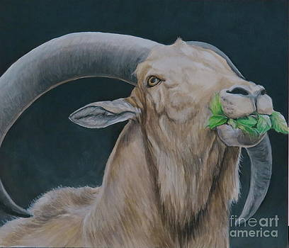 Aoudad Sheep by Charlotte Yealey