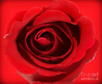 Aphrodite's Rose by Mindy Bench
