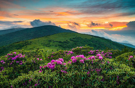 North Carolina Appalachian Trail Roan Mountain Highlands by Dave Allen