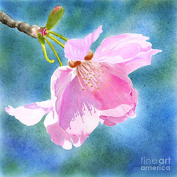 Apple Blossom on Blue by Joan A Hamilton