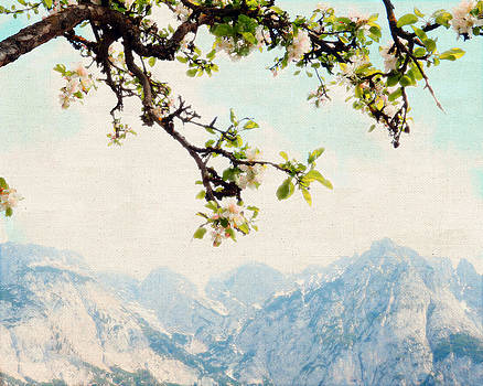 Apple Blossoms and Mountains by Brooke Ryan