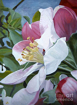 Apple Blossoms by Donna Schaffer