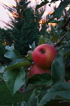 Mick Anderson - Apple Sunset