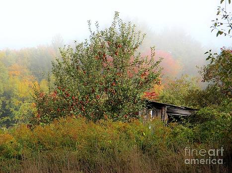 Apples and Shed by Linda Marcille
