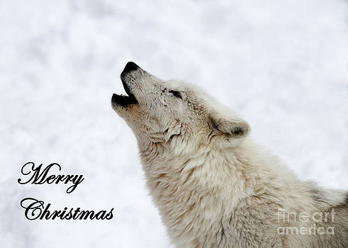 Arctic Wolf Howl Greeting Card by Deanna Wright