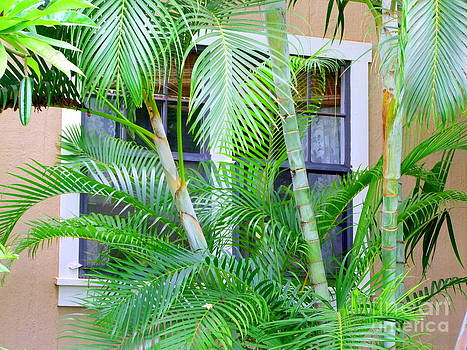 Mary Deal - Areca Palms and Lace