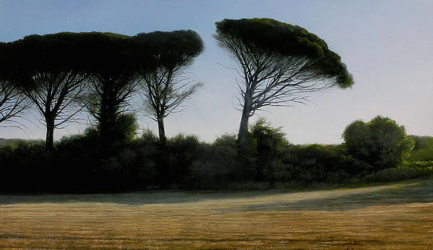 Parasol Pine Trees by Thomas Darnell