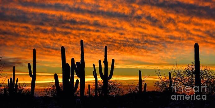Arizona Desert Sunset by Henry Kowalski