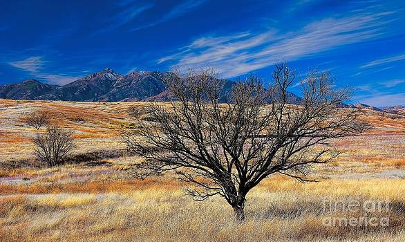 Arizona Mesquite and Mountains by Henry Kowalski