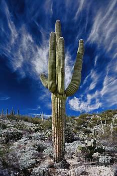 Arizona Saguaro Cactus by Henry Kowalski