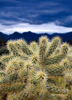 Arizona Teddy Bear Cactus by Henry Kowalski