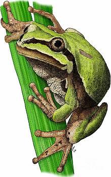 Roger Hall - Arizona Tree Frog