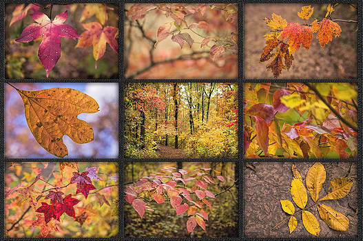Arkansas Autumn by Bonnie Barry