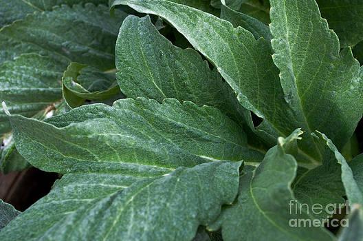 Gwyn Newcombe - Artichoke Flora