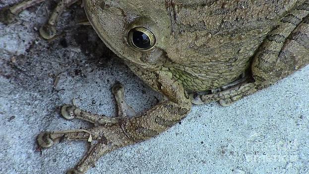 Artistic Frog by Chris Murphy Elliott