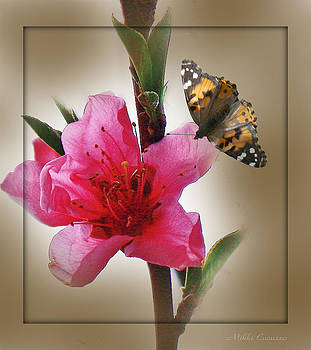 Artsy Flower and Butterly by Mikki Cucuzzo
