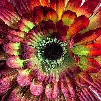 as Flores De Plástico Não by Solange Macedo