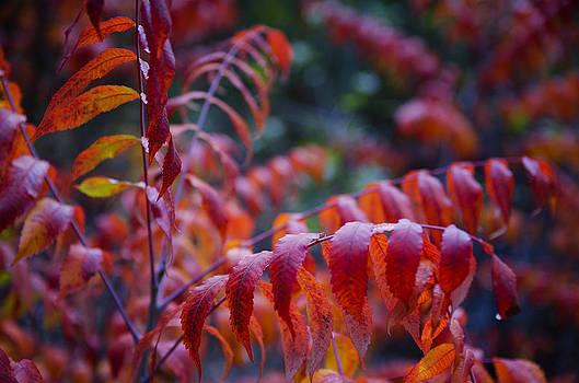 Saija  Lehtonen - As The Leaves Turn