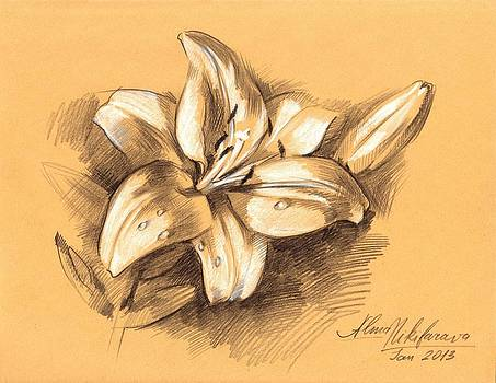 Asiatic Lily Flower with Bud Sketch by Alena Nikifarava
