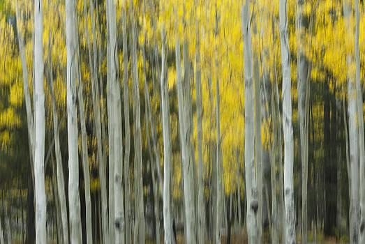Saija  Lehtonen - Aspen Abstract