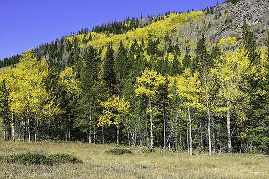 Aspen Foliage by Tom Wilbert