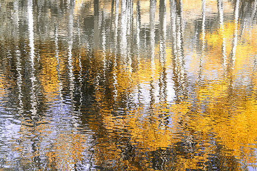 Aspen Reflection by The Forests Edge Photography - Diane Sandoval