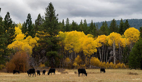 Mick Anderson - Aspens and Cows