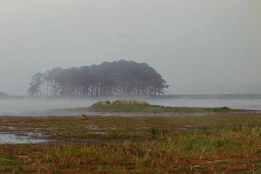 Assateague Fog by Joann Renner