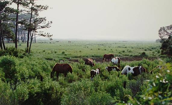 Assateague Herd 2 by Joann Renner