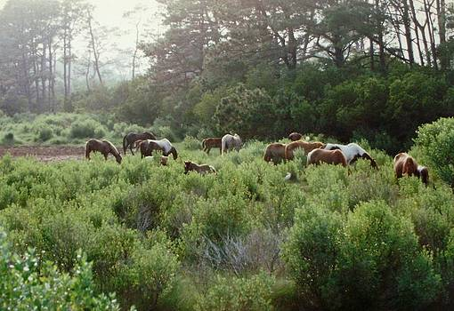 Assateague Herd by Joann Renner