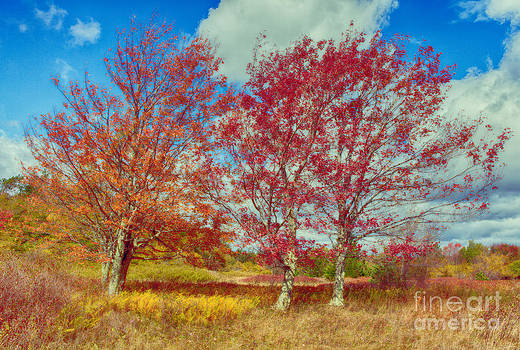 Dan Carmichael - Astonishing Autumn - Fall Colors at Dolly Sods I