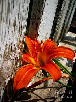 At rest on the fence by Alex Blaha