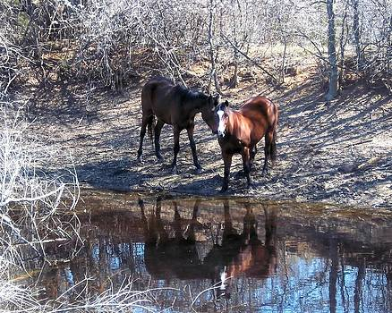 At The Water Hole by Rosalie Klidies