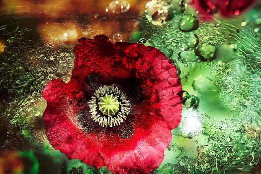 Austin Botanical 2 by Jenny Albritton