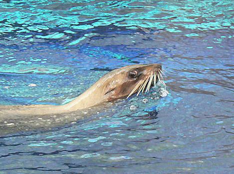 Margaret Saheed - Australian Fur Seal Relaxing