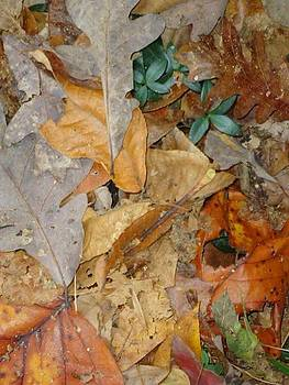 Autum Leaves by Glenn Calloway