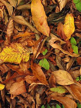 Autumn 02 by Dorin Adrian Berbier