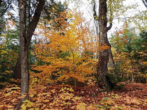 Autumn 1 by Pema Hou