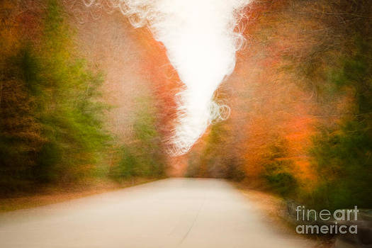 Lisa McStamp - Autumn Abstract