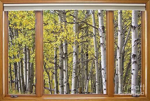 James BO  Insogna - Autumn Aspen Forest Classic Wood Window View