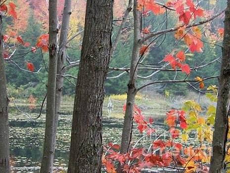 Autumn At Mud Lake by Jackie Mueller-Jones