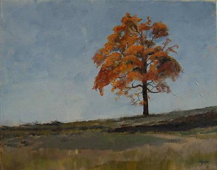 Autumn at Saratoga Battlefield by Terri Messinger