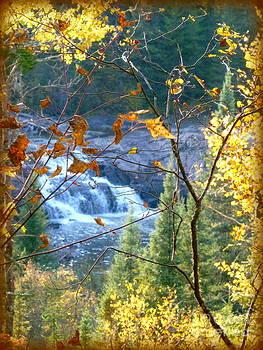 Sue Wild Rose - Autumn At The Falls