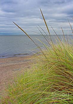 Barbara McMahon - Autumn Beach Grasses