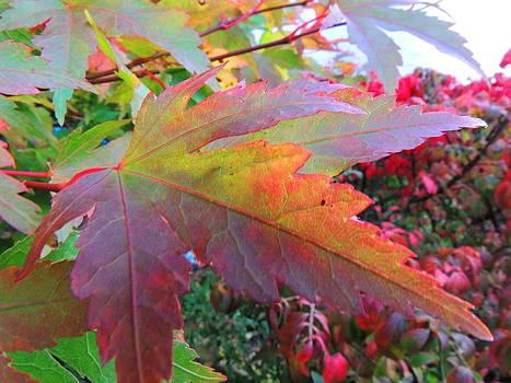 Autumn Beauty by Karen Horn