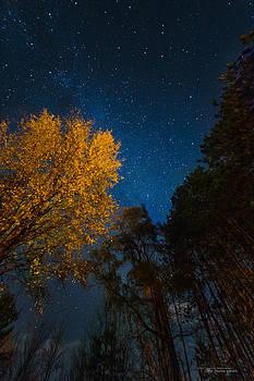Autumn by Night by Dustin Abbott